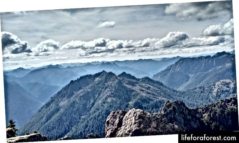 Quang cảnh Công viên Quốc gia Olympic từ Mt. Ellinor, một đỉnh cao đạt được bằng cách đi bộ qua Rừng Quốc gia Olympic. Một sự khác biệt chính. (Ảnh của Eric Goldschein)