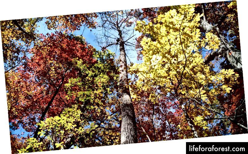 Mùa thu ở rừng quốc gia Pisgah, Bắc Carolina. (ảnh của Eric Goldschein)