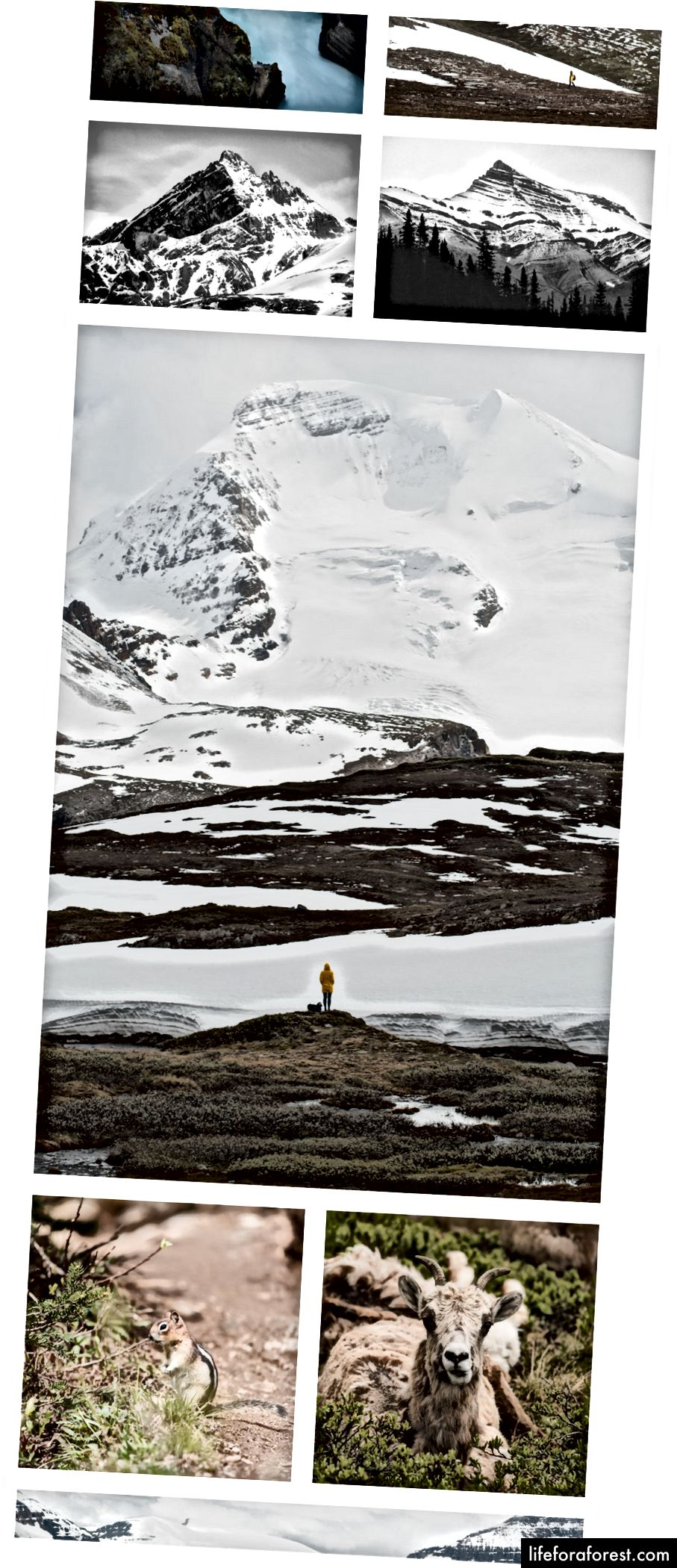 겨울철에 일부 야생 동물과 함께 알파인 하이킹 이야기.