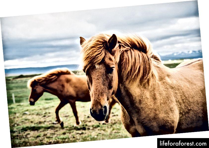 Chắc chắn lớn hơn một con ngựa
