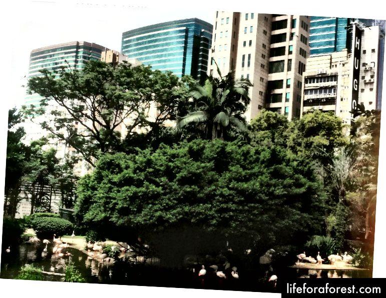 Kovlon Parkning Qush ko'li, shahar Tsim Sha Tsuining o'rtasida joylashgan