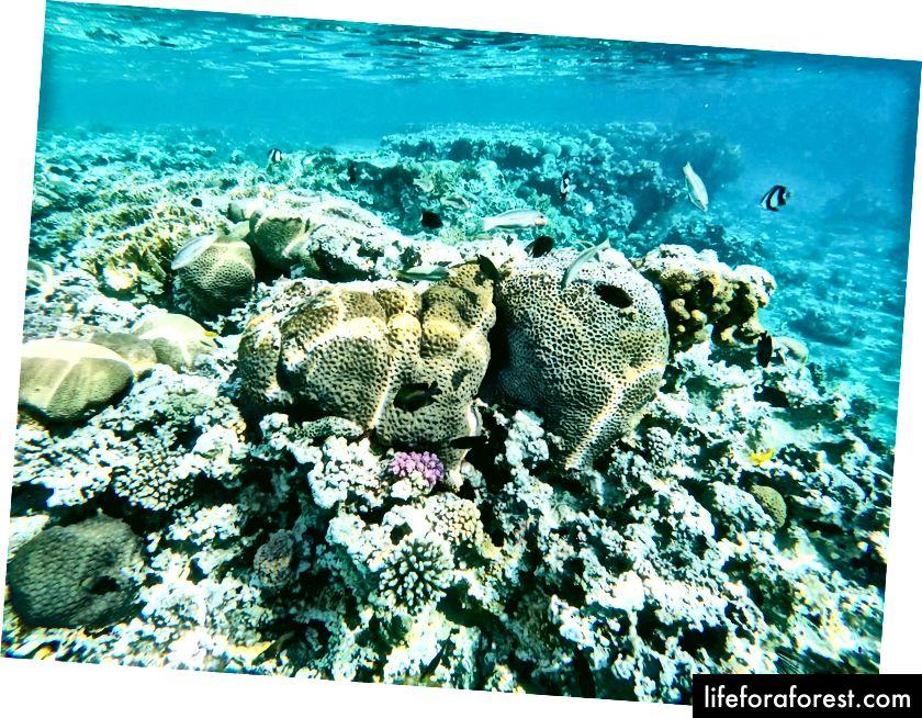 Undersjøisk liv i Rødehavet nær Akaba, Jordan. Foto av Simas Rad [CC BY-SA 4.0], via Palmtree.life