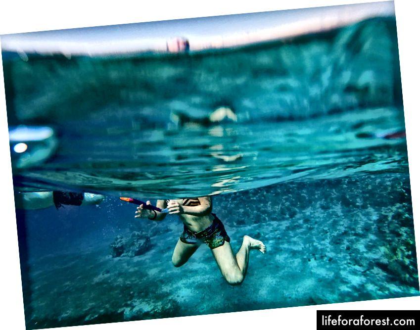 Dykker i Rødehavet nær Akaba, Jordan. Foto av Simas Rad [CC BY-SA 4.0], via Palmtree.life