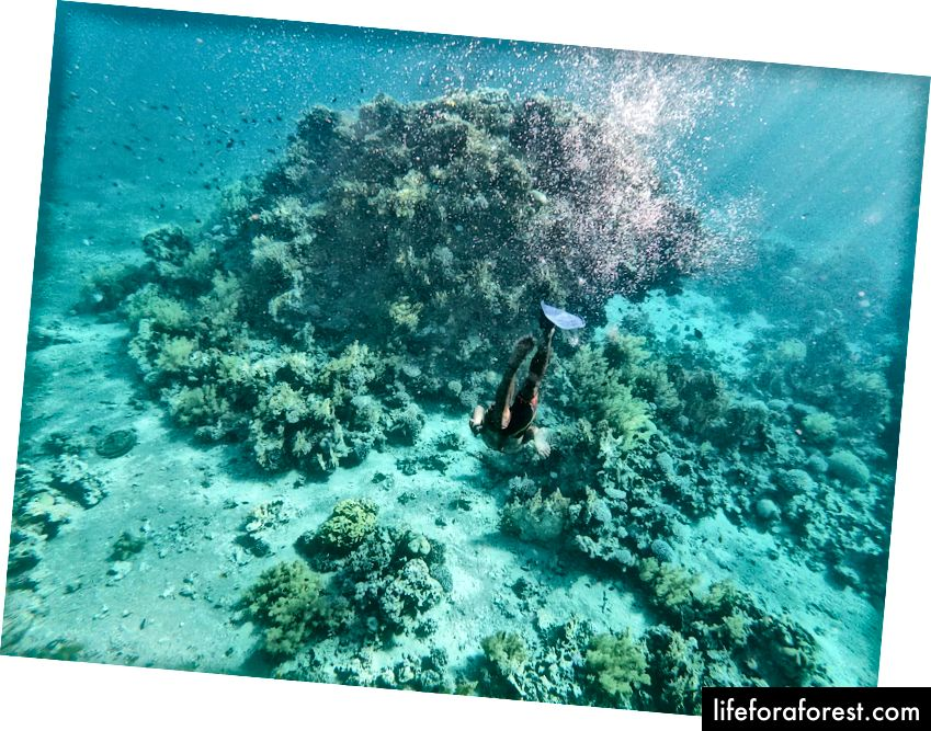 Folk som snorkler i Rødehavet. Foto av Alis Monte [CC BY-SA 4.0], via Connecting the Dots