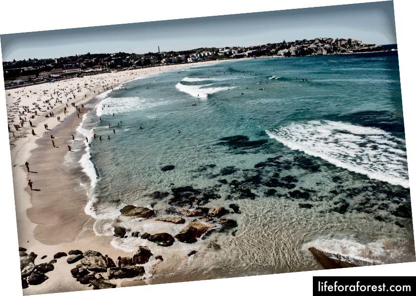 Plaża Bondi. Zdjęcie: Madeleine Ragsdale na Unsplash