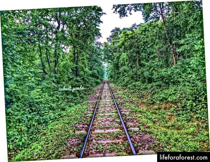 Uma ferrovia de bitola estreita dentro da floresta