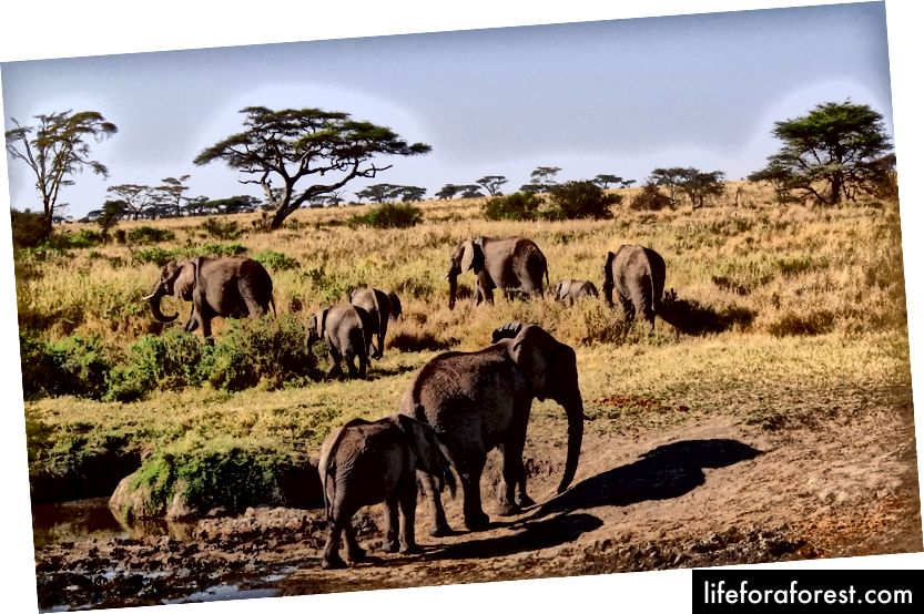Laukinė Tanzanijos gamta Serengetyje - Bjørn Christian Tørrissen nuotrauka