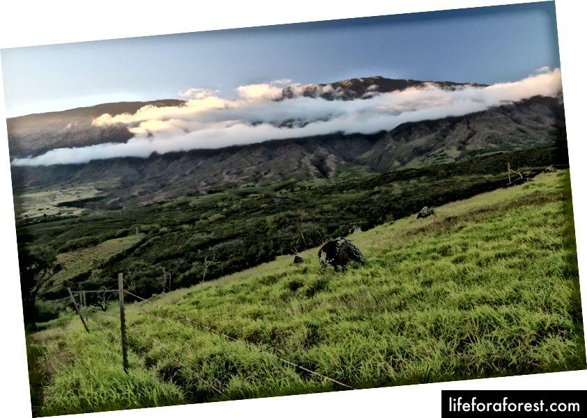 Haleakala vanaf de Pi'ilani Highway.