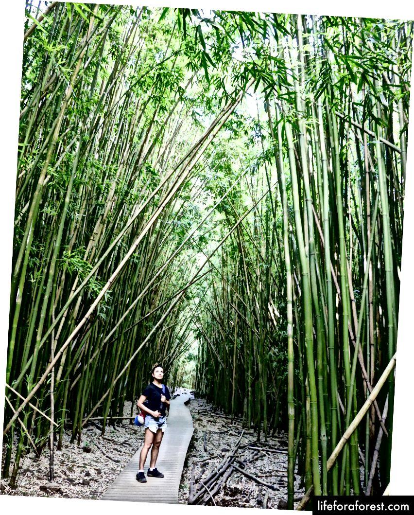 Diep in het bamboebos.