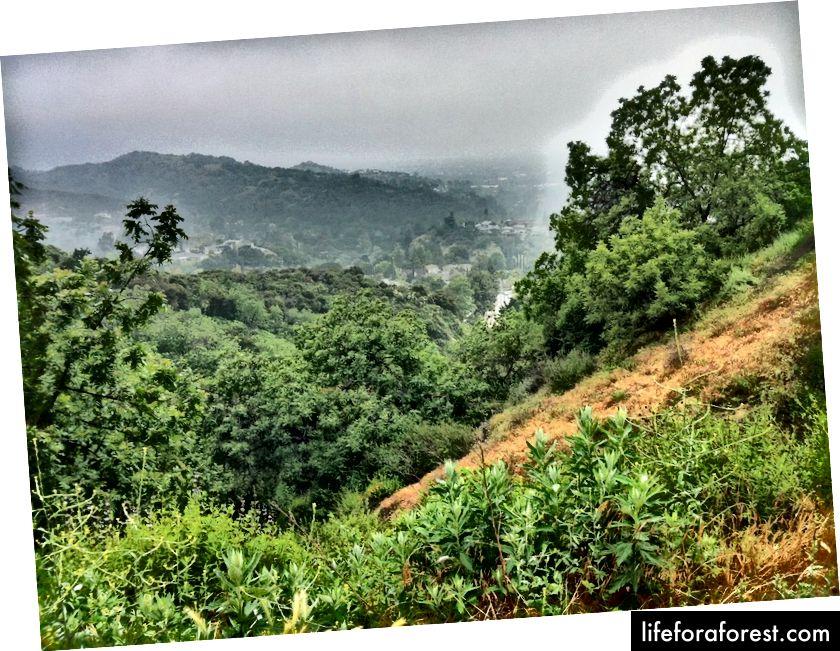 Hold øye med den helt utsøkte regnskogstien