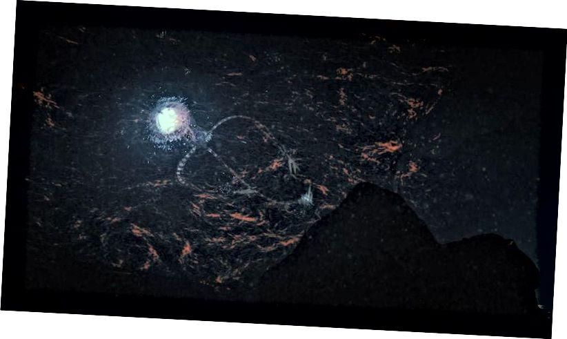Un'illustrazione di un immaginario alieno Europa Octo che nuota lontano da una roccia. Europa, una luna in orbita attorno al pianeta Giove, è spesso considerata il mondo candidato più probabile nel nostro Sistema Solare oltre la Terra per ospitare la vita. E sebbene possa essere potenzialmente pericoloso per i nostri, non è necessariamente a causa di intenzioni malevoli. (Lwp Kommunikáció / flickr)
