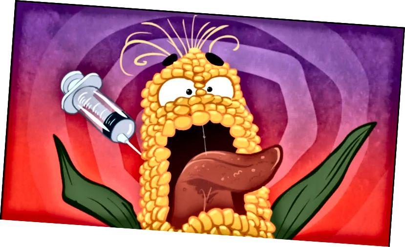 Здаецца, істэрычная кукуруза мадыфікуецца. Крыніца выявы: laoblogger