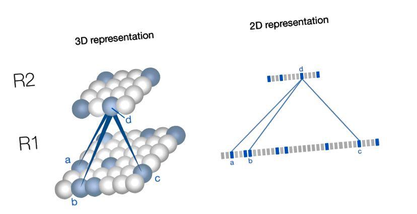At finde struktur i en hierarkisk lavere region. I dette enkle eksempel tager den fremhævede celle input fra tre neuroner i regionen nedenfor og aktiveres derfor, når der detekteres et mønster, der involverer disse 3 celler. Følgende diagrammer repræsenterer celler og regioner i 2D, som vist til højre.