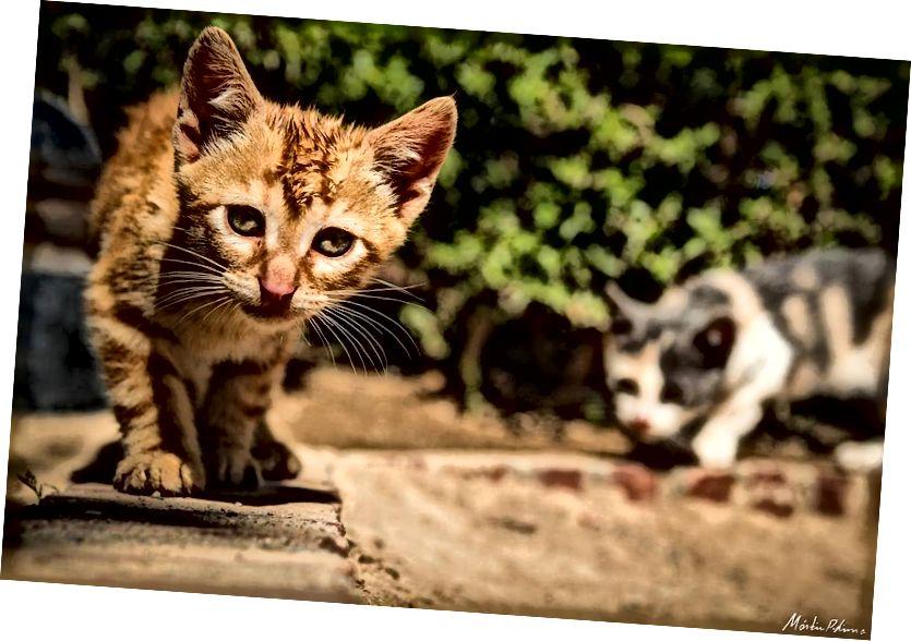Neugierige Katzen in Granada, Spanien