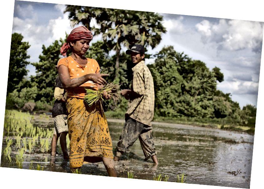 UNDP fördert das klimaresistente Wassermanagement und die landwirtschaftlichen Praktiken im ländlichen Kambodscha, um den Klimawandel anzugehen. Foto: UNDP Anpassung an den Klimawandel.