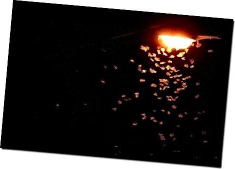 Beleuchtung und ihre Wirkung auf Fledermäuse