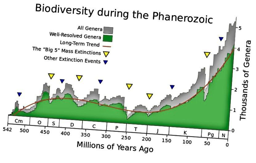 Ein Maß für die biologische Vielfalt und Änderungen in der Anzahl der Gattungen, die zu einem bestimmten Zeitpunkt existieren, um die wichtigsten Aussterbungsereignisse in den letzten 500 Millionen Jahren zu identifizieren. (Wikimedia Commons-Benutzer Albert Mestre mit Daten von Rohde, RA, und Muller, RA)