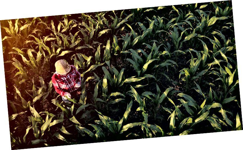 Ад клопату пра навакольнае асяроддзе да злучэння з ежай, якую мы ямо, тысячагоддзі і фермеры больш падобныя, чым можна падумаць.