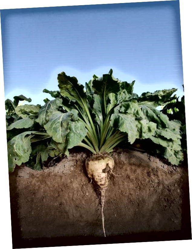 Som en niendegenerations landmand, der dyrker sukkerroer, tørre bønner og kartofler, ved Laura fra første hånd vigtigheden af at beskytte land i de kommende generationer. (Billedkredit: Laura Rutherford)