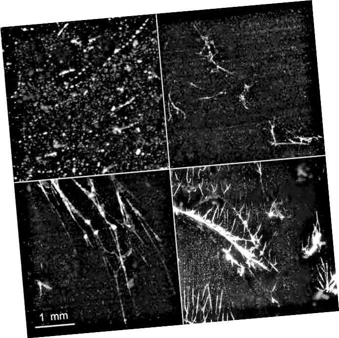 Vedel heelium (ülal), mida mõnikord kasutatakse varajase universumi mudeliks, avaldab faasisiirete läbimisel kvantmehaanilisi defekte. Neid pragusid on näha ka vedelkristallides ja ülijuhtides. Pilt: DPL mittelineaarne dünaamikalabor.