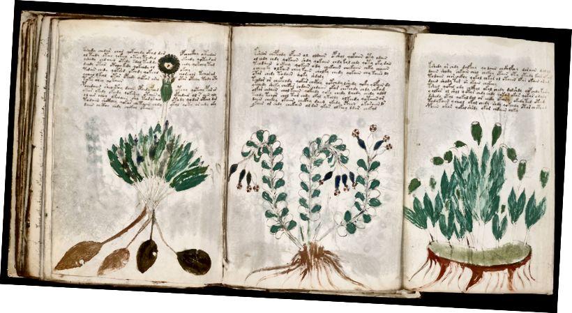 Страница рукописи Войнича (170)