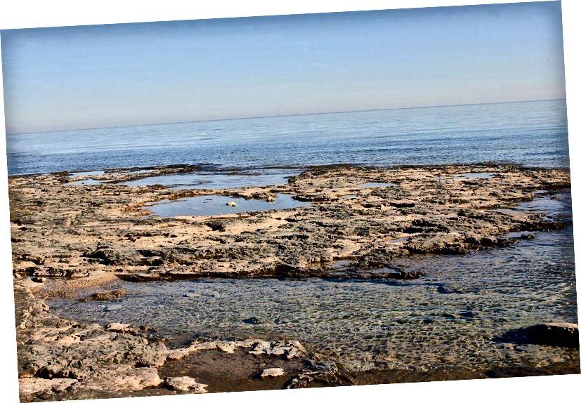 Kolam pasang surut, seperti yang diperlihatkan di sini dari Wisconsin, muncul di permukaan tanah dan genangan air besar, seperti danau, laut, atau lautan. Kumpulan dengan kondisi yang tepat dan molekul prekursor adalah salah satu kandidat untuk kehidupan yang mungkin muncul di Bumi. (GOODFREEPHOTOS_COM / PIXABAY)