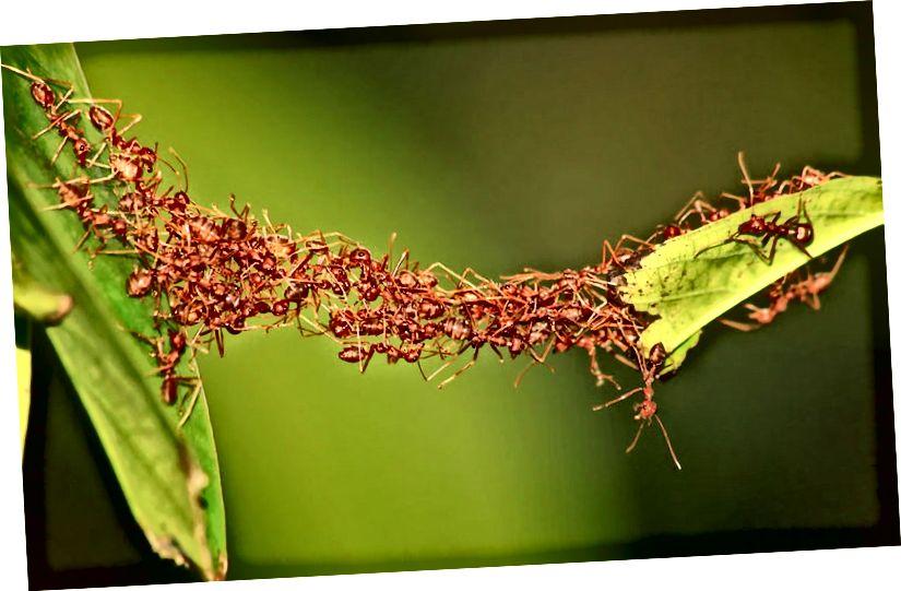 Može li mrav učiniti Math?