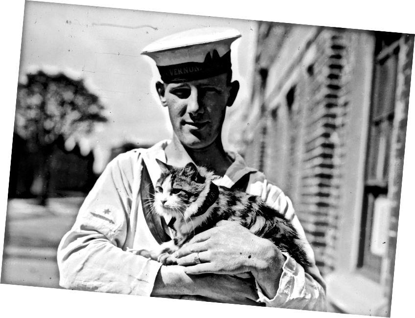 Lean traidisiún cat na loinge tríd na cianta. | Grianghraif Fox / Getty