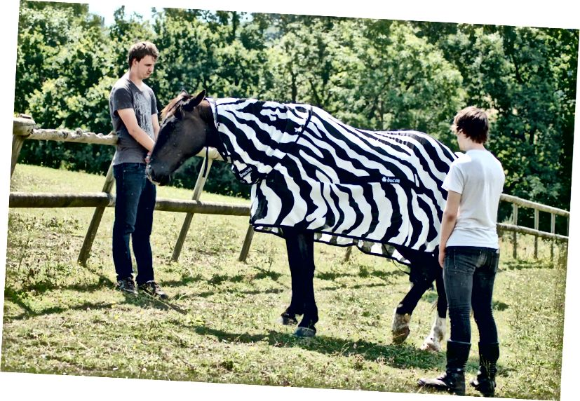 Un cavallo indossa un cappotto a strisce per questo studio. (Credito: Tim Caro)