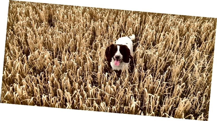 https://www.maxpixel.net/Nature-Agriculture-Corn-Food-Organic-Dog-Fresh-2761274