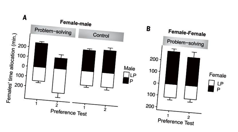 Fig. 2. Tempo trascorso dalle femmine focali vicino a individui preferiti e meno preferiti (media ± SEM). Il tempo trascorso presso (A) maschi (esperimento 1) e (B) femmine (esperimento 2). L'osservazione di manifestanti maschi meno preferiti che aprono scatole problematiche ha comportato un significativo spostamento delle preferenze verso questi maschi. Non è stato riscontrato alcun cambiamento di preferenza significativo nel gruppo di controllo o nel gruppo femmina-femmina. P, preferito; LP, meno preferito. (Doi: 10.1126 / science.aau8181)