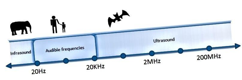 Els humans no sentim els sons d'ecolocalització que els ratpenats produeixen per estimar distàncies.