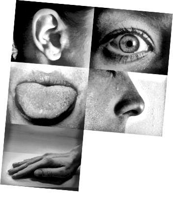 Nasze zmysły potrafią postrzegać kwant. Zdjęcie: Allan-Hermann Pool, Wiki Commons.