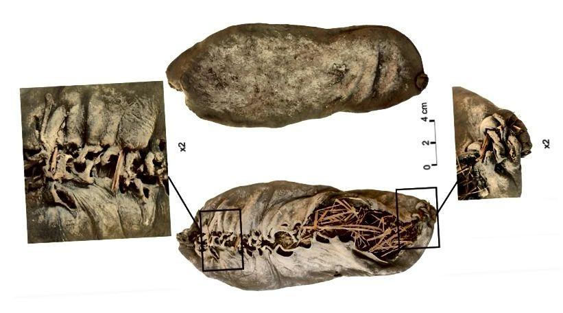 Самая старая вядомая скураная абутак, якая была звязана шнуркамі, больш за 5500 гадоў таму. Малюнак: Pinhasi R, Gasparian B, Areshian G, Zardaryan D, Smith A і інш.
