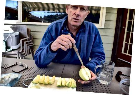Neal Carter układa obok siebie plastry Arctic Golden Delicious. Stephanie Lee / BuzzFeed News