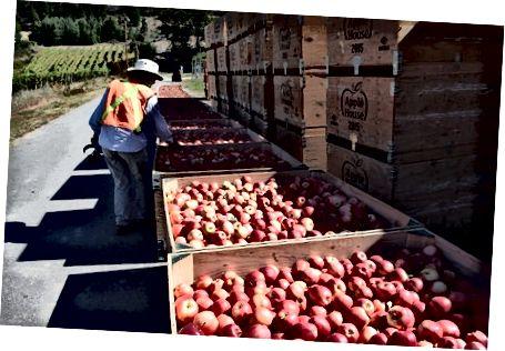 Louisa Carter pakuje jabłka do wysyłki. Stephanie Lee / BuzzFeed News