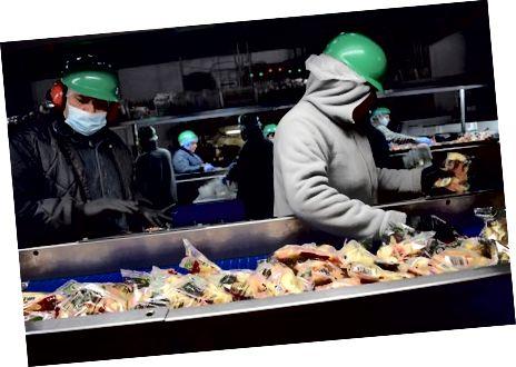 Pracownicy sortują torby z plasterkami w Crunch Pak. Stephanie Lee / BuzzFeed News