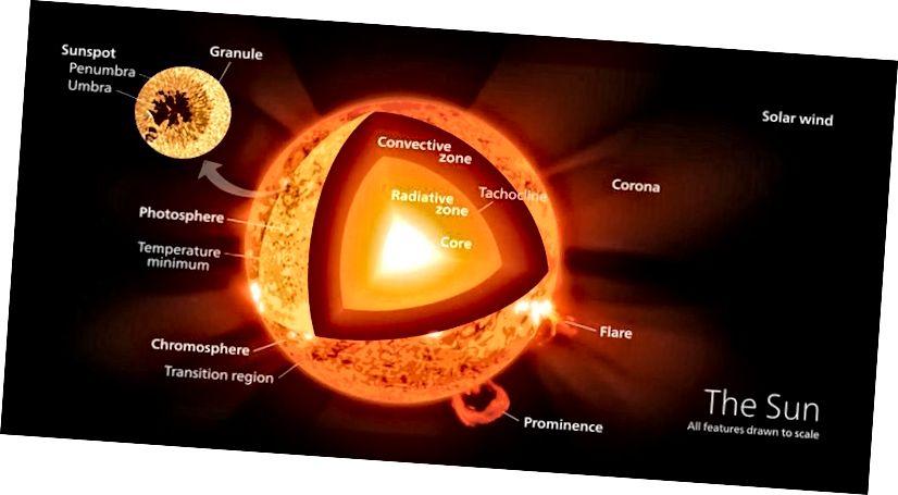 У гэтым разрэзе прадстаўлены розныя ўчасткі паверхні і ўнутранай часткі Сонца, у тым ліку ядра, дзе адбываецца ядзерны сінтэз. Хоць вадарод ператвараецца ў гелій, большасць рэакцый і большасць энергіі, якая сілкуе Сонца, паступаюць з іншых крыніц. (WIKIMEDIA COMMONS USER KELVINSONG)