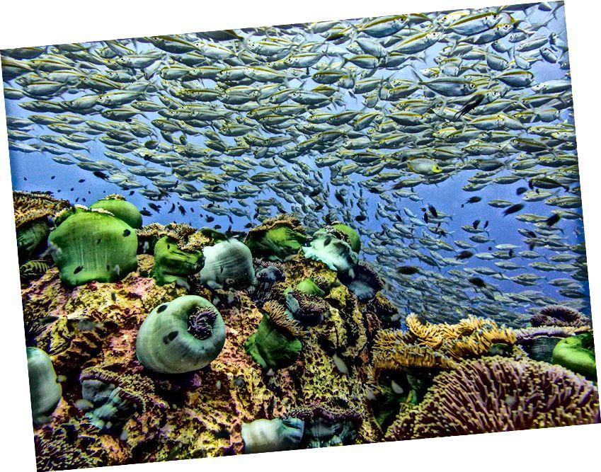 Unterwasserschönheit | © jellyman_underwater / Instagram