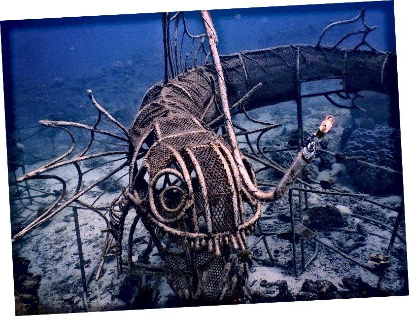 Meeresschutz | © Das New Heaven Reef Conservation Program