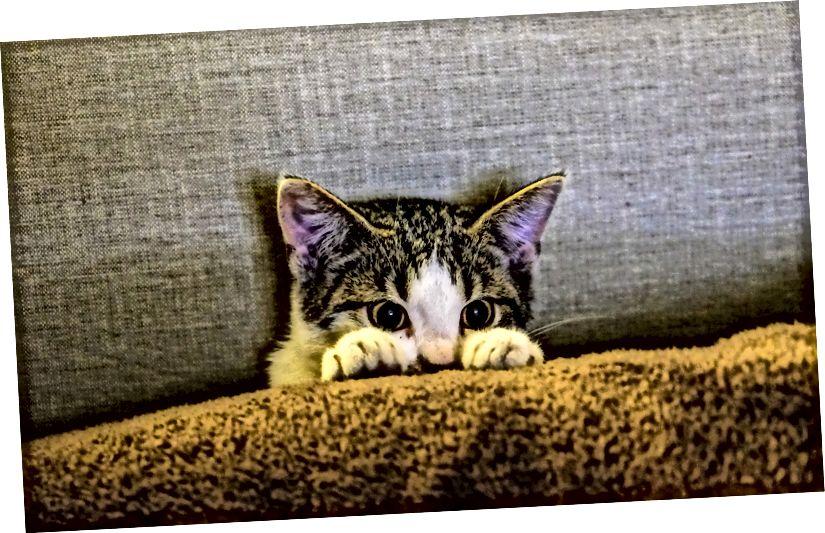 Abgebildet; Kätzchen, das auf die dunklere Seite schaut