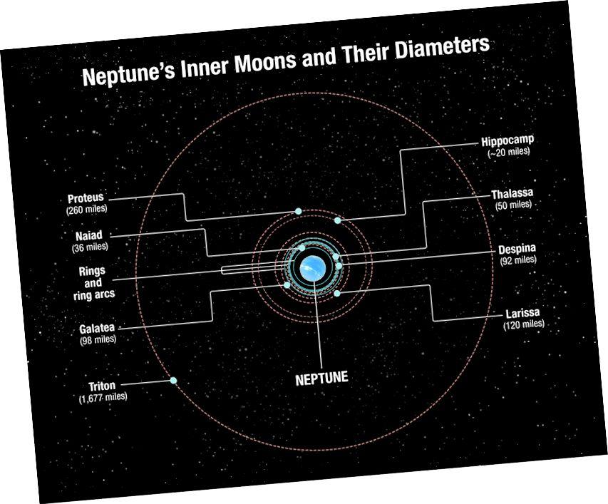 Während die meisten Monde des Neptun in der Nähe des Planeten umkreisen, einschließlich Hippocamp und Proteus, zeichnet der mächtige Triton einen größeren Weg um die Welt. Bildnachweis: NASA, ESA und A. Feild (STScI)