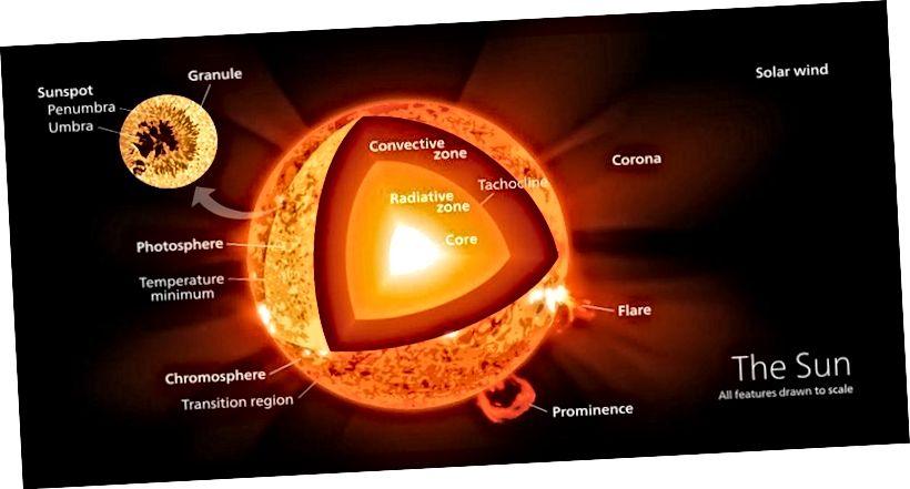 У гэтым разрэзе прадстаўлены розныя ўчасткі паверхні і ўнутранай часткі Сонца, у тым ліку ядра, дзе адбываецца ядзерны сінтэз. З цягам часу вобласць, якая спальвае гелій, у ядры пашыраецца, у выніку чаго выход энергіі Сонца ўзрастае. Малюнак: Wikimedia Commons карыстальнік Kelvinsong.