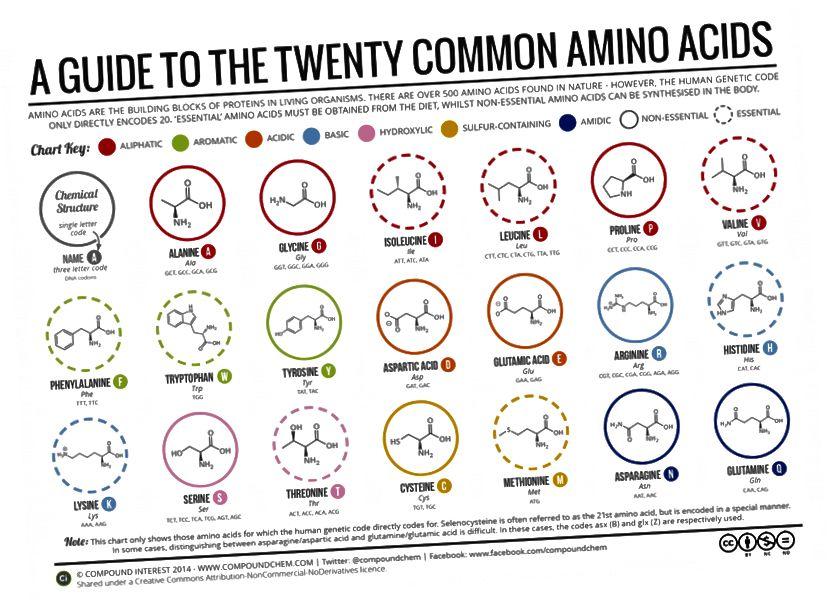 https://www.compoundchem.com/2014/09/16/aminoacids/