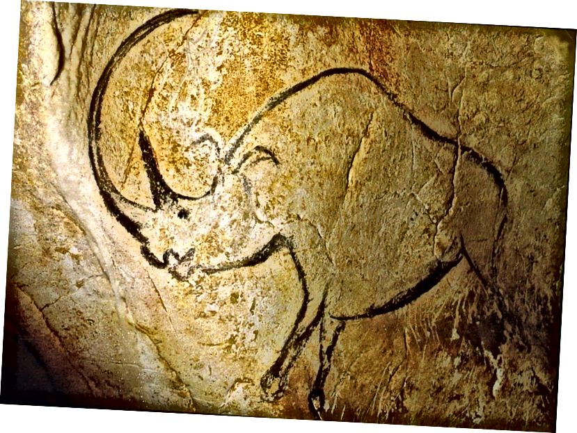 Le grotte di Vallon-Pont-d'Arc ospitano molti dei dipinti più antichi: raffigurazioni di animali disegnati dall'uomo. Qui è raffigurato un rinoceronte con un grande corno ricurvo. Le illustrazioni più antiche trovate in questa grotta hanno più di 30.000 anni. (CHAUVET CAVE, ARDÈCHE, FRANCIA / DOMINIO PUBBLICO)