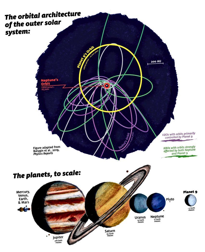 Ein Diagramm mit den Umlaufbahnen und Durchmessern des Planeten Neptun und mehreren transneptunischen Objekten. In lila dargestellte Umlaufbahnen weisen darauf hin, dass sie von einem neunten Planeten betroffen sind, weit entfernt von der am weitesten entfernten bekannten Welt. Bildnachweis: James Tuttle Keane / Caltech