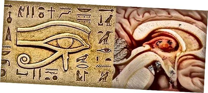 Ägyptisches Auge des Ra und der menschlichen Zirbeldrüse