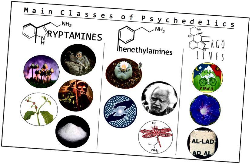 Figur 1. Bemærkelsesværdige tryptaminer inkluderer (fra højre): 5-MeO-DMT og bufotenin (Bufo alvarius), psilocybin og psilocin (Psilocybe-svampe), ibogain (Tabernanthe iboga), DMT (Chacruna viridis) og forskellige analoger, herunder: 4 -HO-MET (billede), 5-MeO-DiPT, DPT, MET og 4-AcO-DMT. Bemærkelsesværdige phenethylamines inkluderer (fra øverste venstre): Mescaline (Peyote), 2C'erne (opfinder Sasha Shulgin på billedet), MDMA (MAPS-logo) og en lang række analoger, herunder: Bromo-DragonFLY (på billedet), DOM, DOI og NBOMe . Bemærkelsesværdige ergoliner inkluderer (ovenfra): LSD, LSA (Ipomoea sp) og forskellige analoger, herunder: AL-LAD (på billedet), ALD-52 og 1-P-LSD.