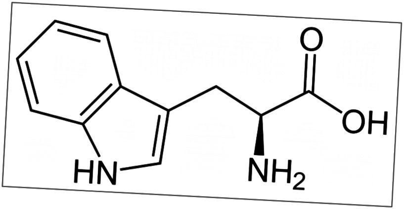 Figur 3. L-tryptophan
