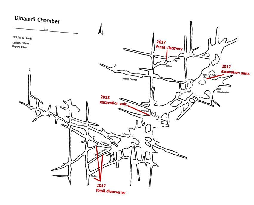Trenutna karta dinaledijske komore i okolnih pukotina. Uski prolazi koji vode izvan glavne komore uistinu su maleni. Zasluge: Steven Tucker.